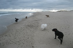 doggy daycare in cape cod