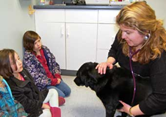 falmouth animal hospital pet friendly veterinarians in cape cod