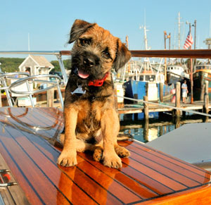 travel with dog in cape cod